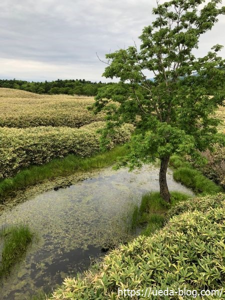 知床五胡 高架木道 池