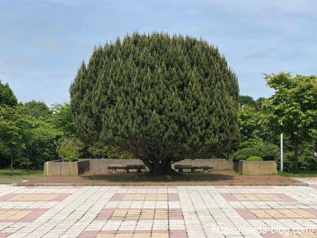 明治公園 印象的な木