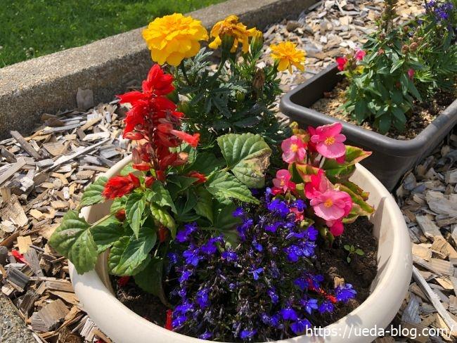 明治公園 花壇の花