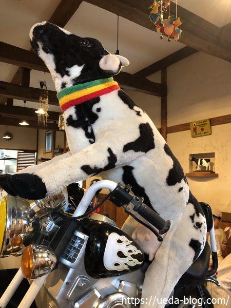 牛小屋のアイス バイクに乗る牛