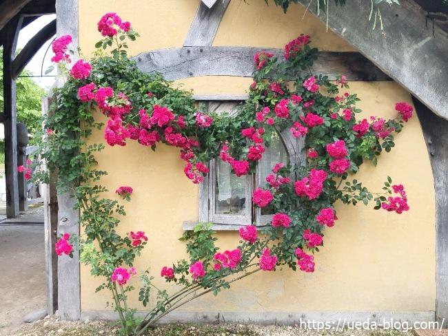 銀河庭園 ハート型のバラ