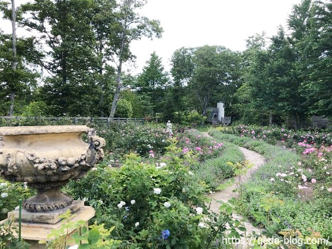 銀河庭園 バラの畑