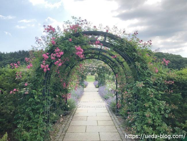 銀河庭園 バラのアーチ