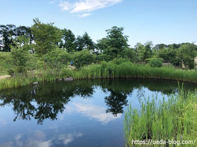 銀河庭園 ベアガーデンの池