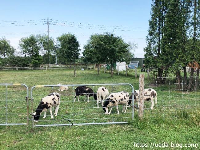 みどりの牧場 ヒツジの群れ