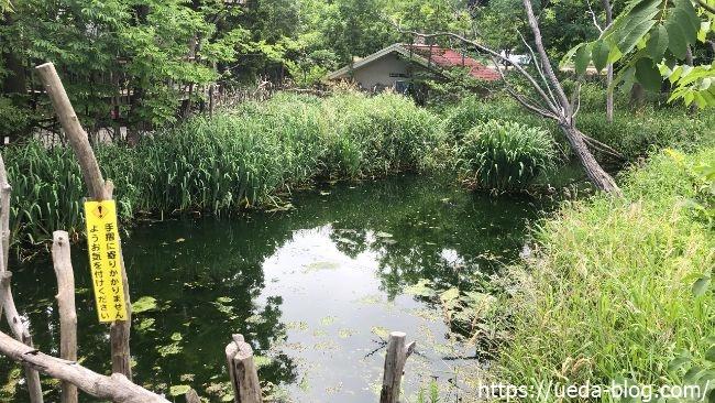 葦笛洞(いてきどう) 湿地帯