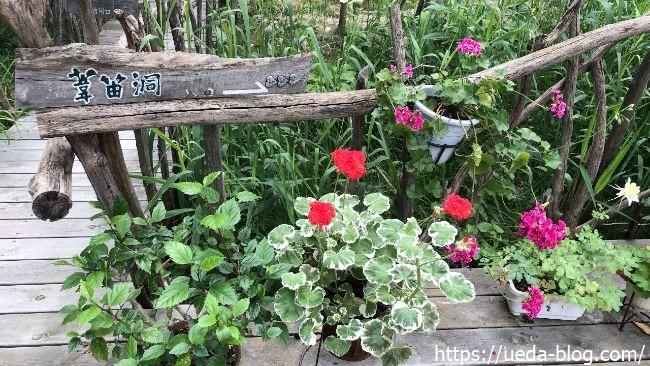 葦笛洞(いてきどう) 橋道の花壇