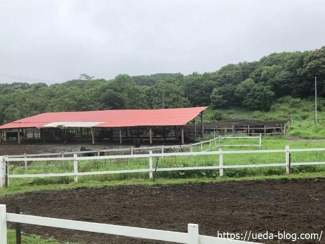 ウエムラ牧場 牛舎