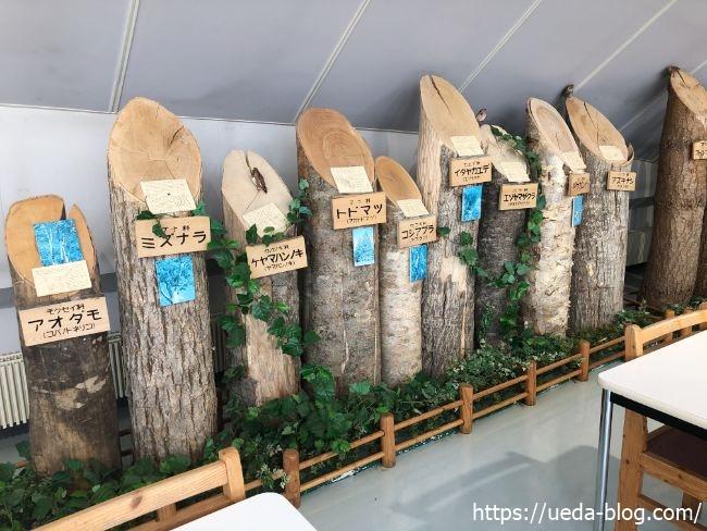 樹木の標本