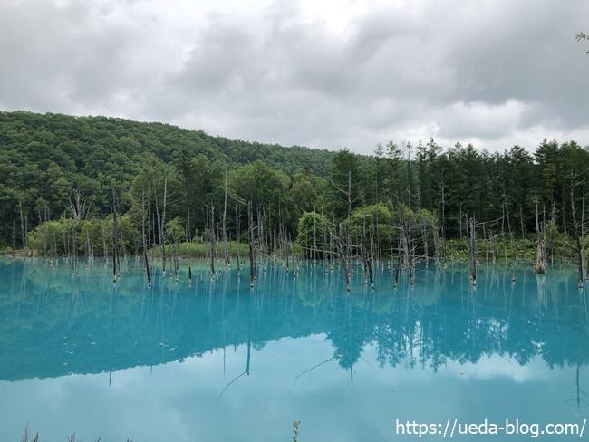 青い池の画像写真