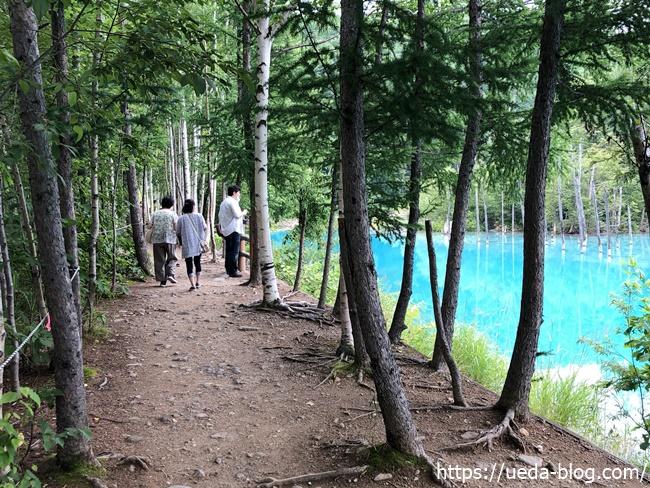 青い池の周囲を回る道